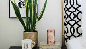 thehomeissue_plant