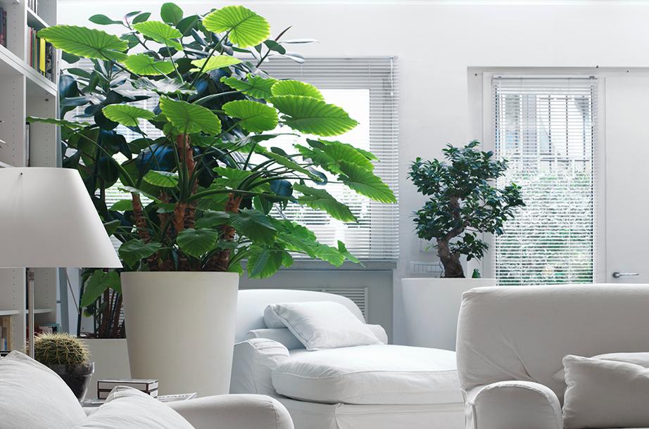 Ενα φυτό μέσα στο δωμάτιο εκτός από τις ευεργετικές ιδιότητες που έχει στην ατμόσφαιρα παίζει και ενεργό ρόλο στη διακόσμηση.