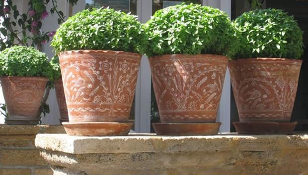 Φυτά που αγαπούν το καλοκαίρι