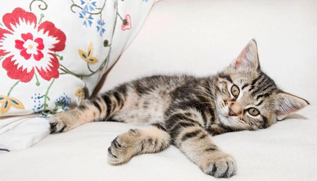 Καλωσορίστε τη γάτα σας στο σπίτι…