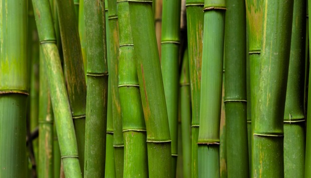 Bamboo... Το αγαπημένο