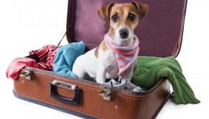 thehomeissue_dog_travel