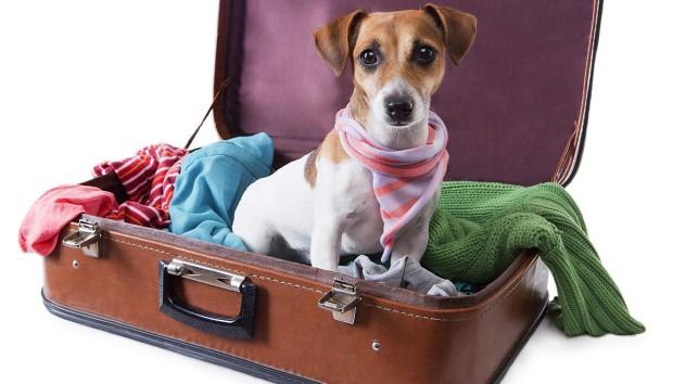 Πώς να ταξιδέψει άνετα ο σκύλος σας