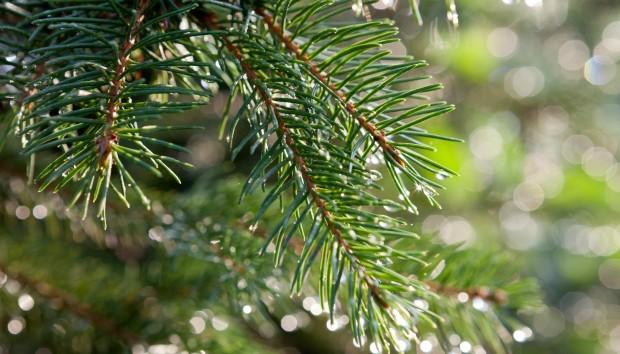 Ανακυκλώστε το Χριστουγεννιάτικο Δέντρο σας