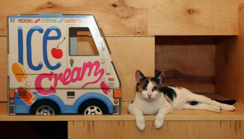 0107a03ef0de Άνοιξε στη Νέα Υόρκη το Πρώτο Καφέ με Γάτες!spirossoulis.com – the ...