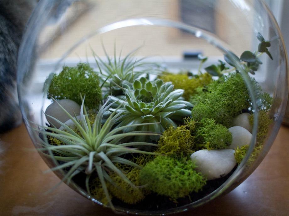 Προσθέστε γλάστες, μίνι ενυδρεία φυτών για να νοιώσετε πιο οικία σε ένα ενοικιαζόμενο σπίτι