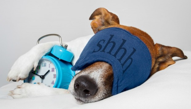 Το Tip του Σαββατοκύριακου: Πώς Θα Κάνετε το Κρεβάτι Σκύλου σας να μην Μυρίζει