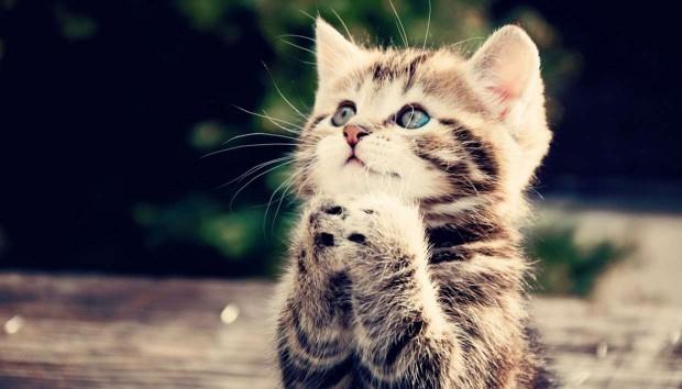 5 Συμβουλές για Σπίτι Με Γάτα, αλλά Χωρίς Ζημιά!