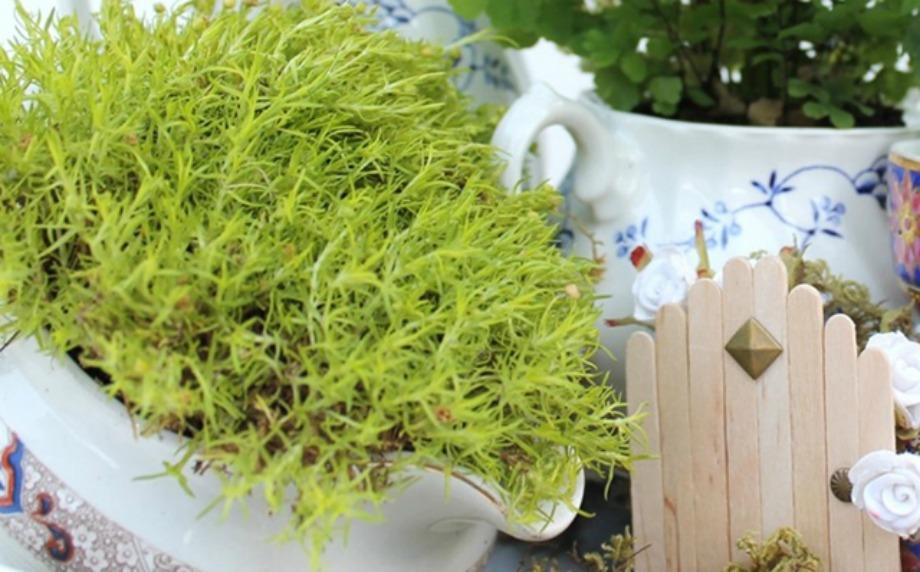 Χρησιμοποιήστε ολόκληρο το σετ τσαγιού για να φυτέψετε φυτά στον κήπο σας