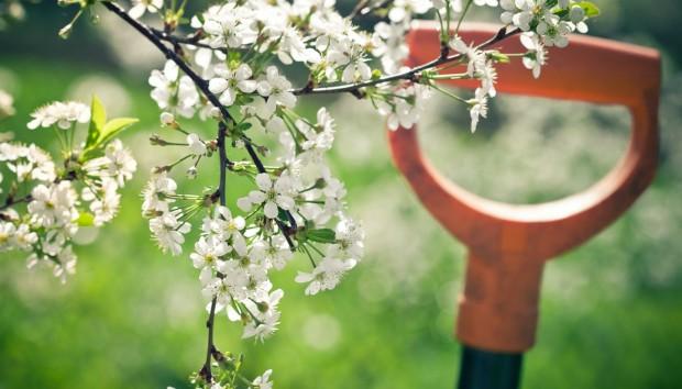 Τα 7 πιο Κοινά Λάθη που Πρέπει να Αποφύγετε στα Φυτά σας