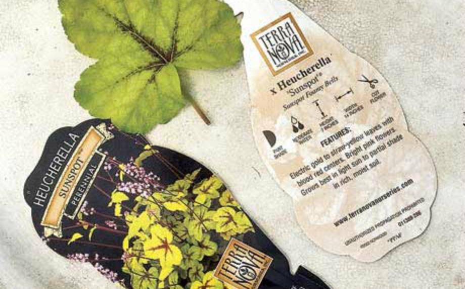 Προσέξτε τις ετικέτες γιατί αυτές θα σας δώσουν σημαντικά στοιχεία για την φροντίδα των φυτών σας