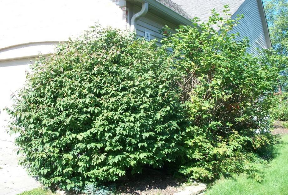 Μην αφήνετε θάμνους και μεγάλα δέντρα ακριβώς έξω από παράθυρα ή πόρτες