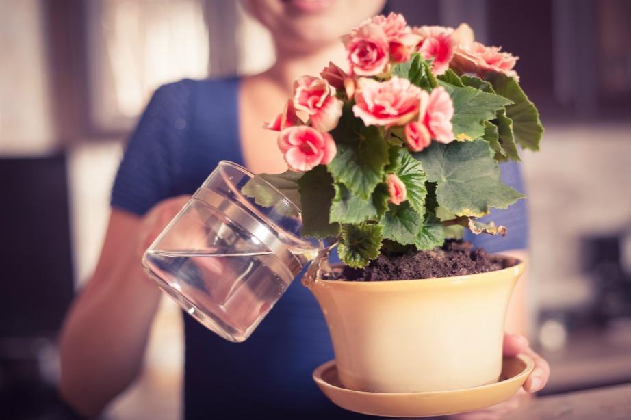 Δεν χρειάζεται να ανησυχείτε καθόλου για τα φυτά σας όσο λείπετε για Πάσχα στο χωριό.