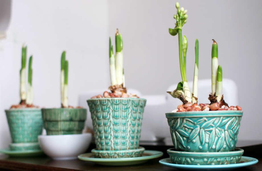 Μη βιαστείτε να μετακινήσετε τα ανθισμένα φυτά σας πριν τελειώσει η ανθοφορία τους.
