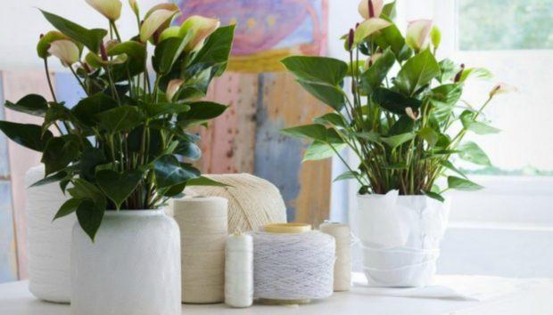«Πότε είναι η κατάλληλη εποχή για να ξεκινήσω να βγάζω τα φυτά εσωτερικού χώρου στη βεράντα μου;»