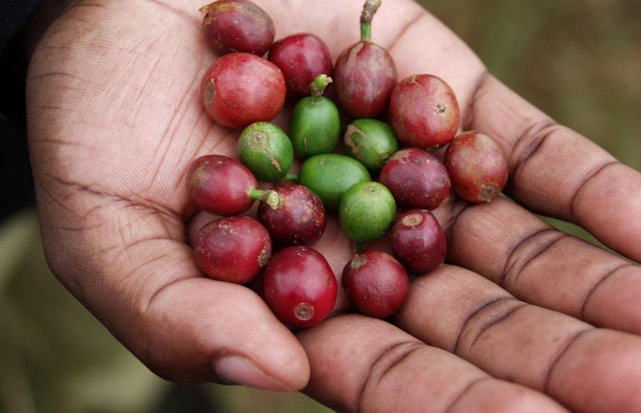 O καφές είναι φρούτο και σύντομα, λόγω αλλαγής στην επεξεργασία του, η γεύση του θα αλλάξει