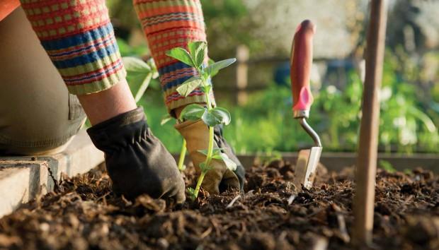 6 Λόγοι για τους Οποίους η Ενασχόληση με τα Φυτά σας Κάνει πιο Υγιείς