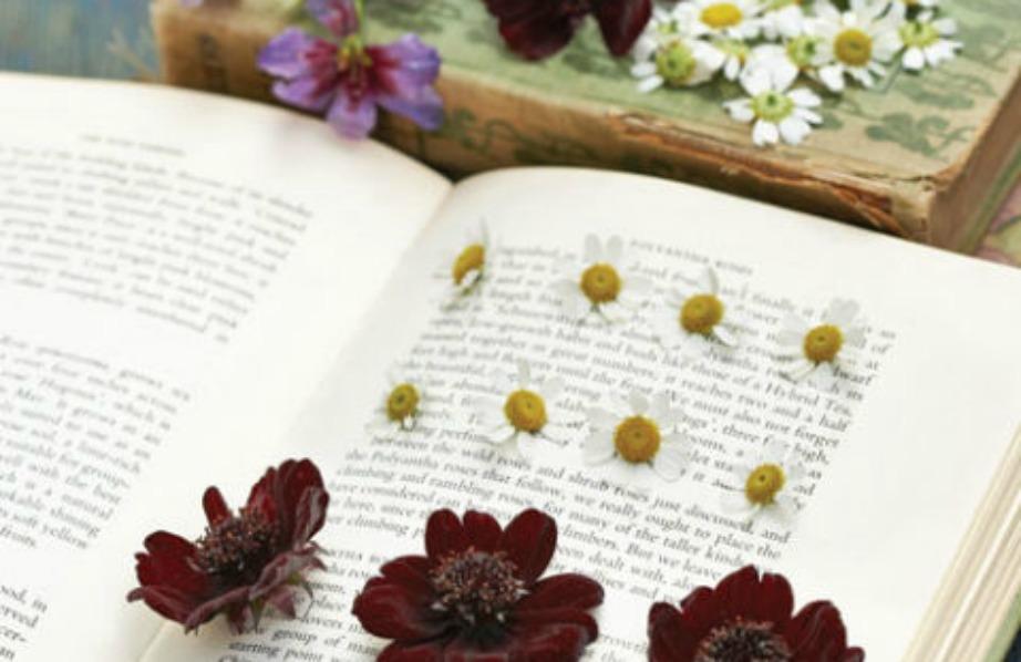 Φτιάξτε αποξηραμένα λουλούδια για να τα χρησιμοποιήσετε στο μέλλον