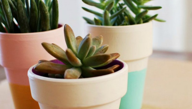 Λουλουδάτο DIY: Μεταμορφώστε τα Γλαστράκια σας με τον Πιο απλό Τρόπο