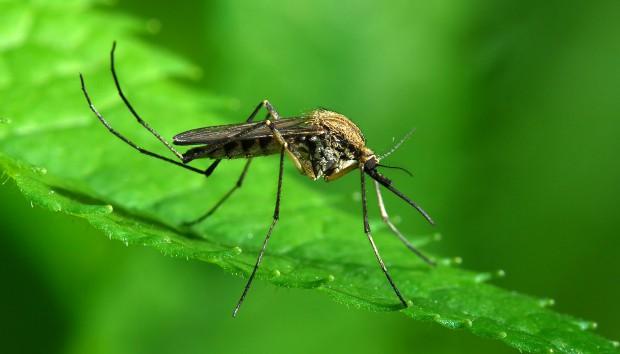 Κουνούπια τέλος! 10 φυσικοί τρόποι για να τα διώξετε μια και καλή