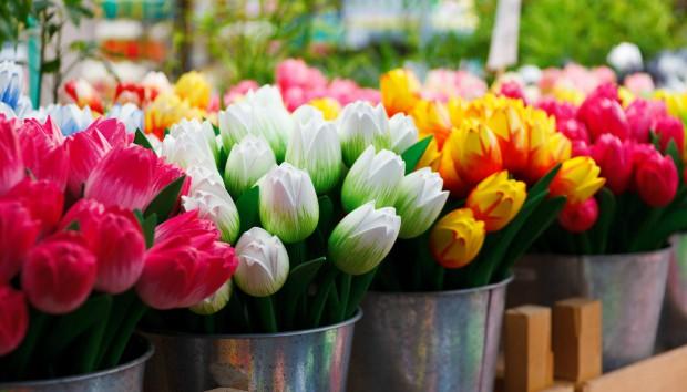 Φτιάξτε μια Παραδεισένια Βεράντα με Λουλούδια που δεν Κοστίζουν Τίποτε