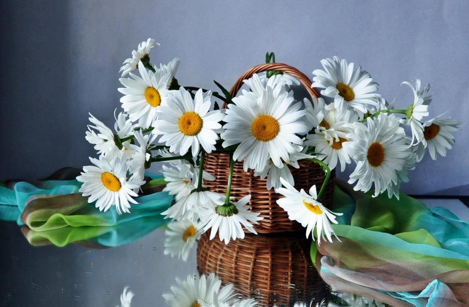 Οι μαργαρίτες είναι φτηνές και πολύ όμορφες για τη βεράντα ή τον κήπο σας.