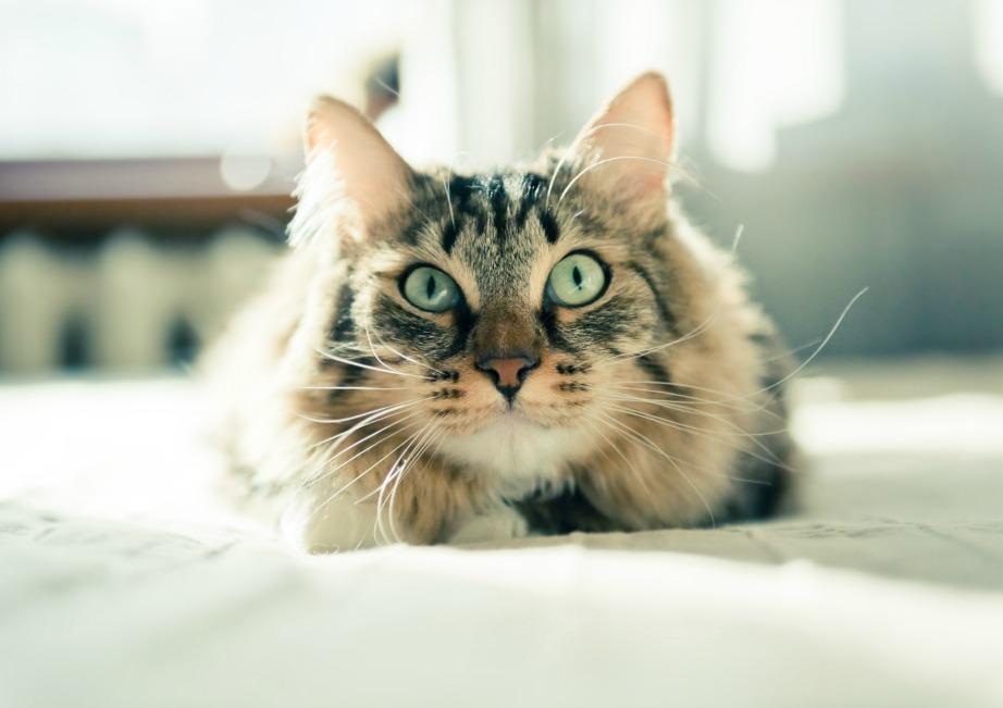 Η γάτα σας μπορεί να προσελκύσει ευκολότερα έναν διαρρήκτη.