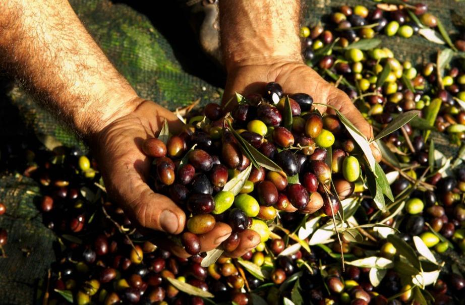 Το ελαιόλαδο μαζεύεται με τα χέρια κια η διαδικασία παραγωγής του είναι δύσκολη, οπότε είναι λογικό να είναι ακριβό συγκριτικά με άλλα προϊόντα.