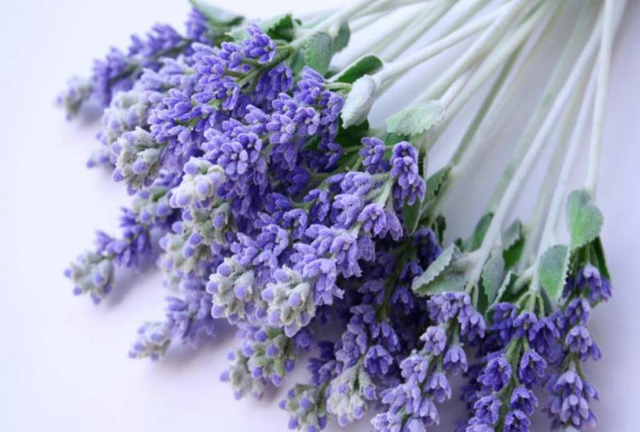 Η λεβάντα είναι ένα φυτό που αντέχει πολύ χωρίς νερό και επίσης διώχνει τα κουνούπια.