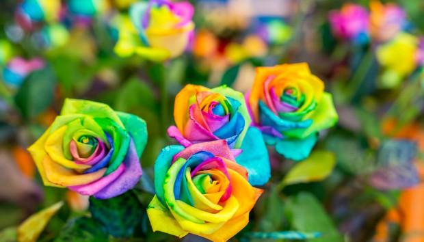 Όλα Αυτά τα Απίστευτα Πράγματα που δεν Ξέρετε για τα Τριαντάφυλλα