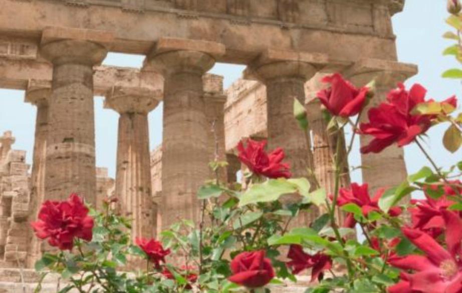 Οι αρχαίοι Ρωμαίοι καλλιεργούσαν τριαντάφυλλα και τα χρησιμοποιούσαν για διακοσμητικούς σκοπούς.