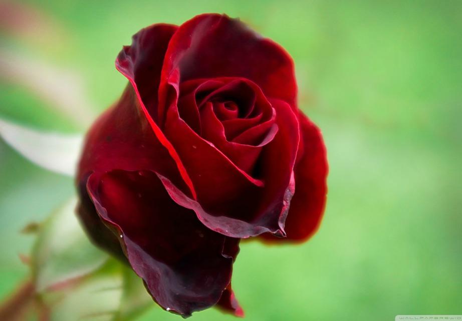Το σκούρο κόκκινο δηλώνει την ασυνείδητη ομορφιά.