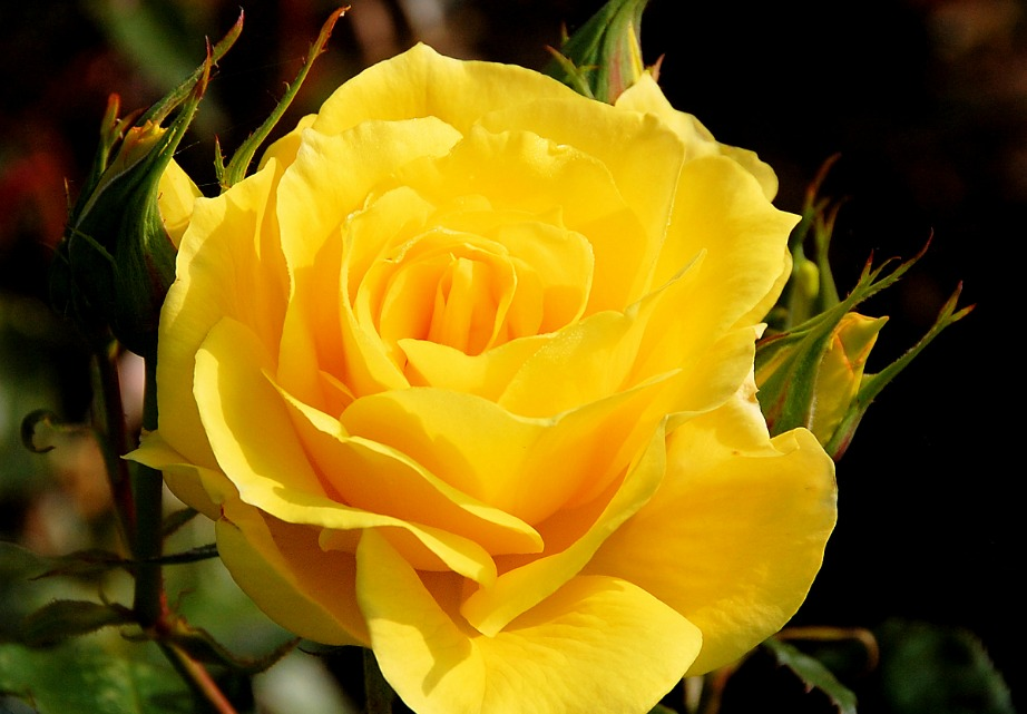 Το κίτρινο είναι το χρώμα της απιστίας.