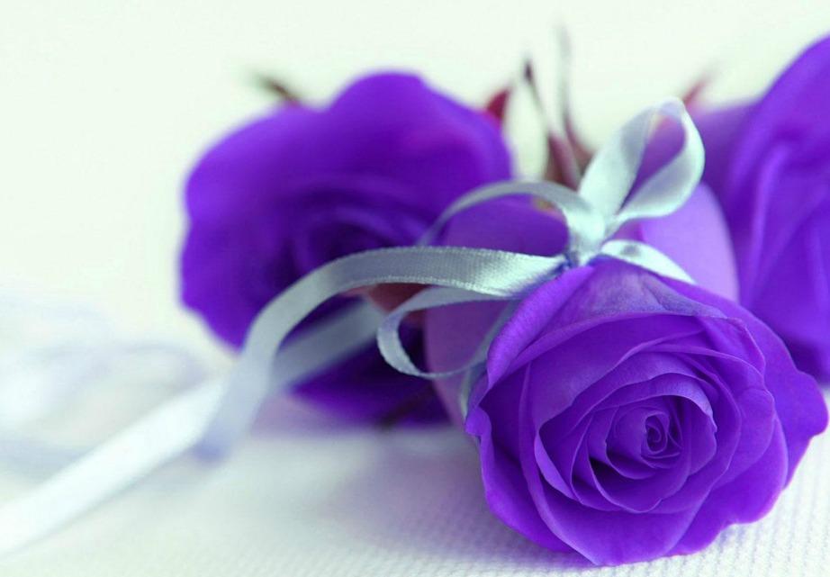Το μοβ χρώμα παραπέμπει σε έρωτα με την πρώτη ματιά.