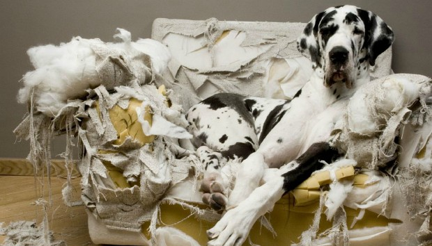 Πράγματα που δεν Πρέπει να Έχει το Σπίτι σας αν Έχετε Σκύλο