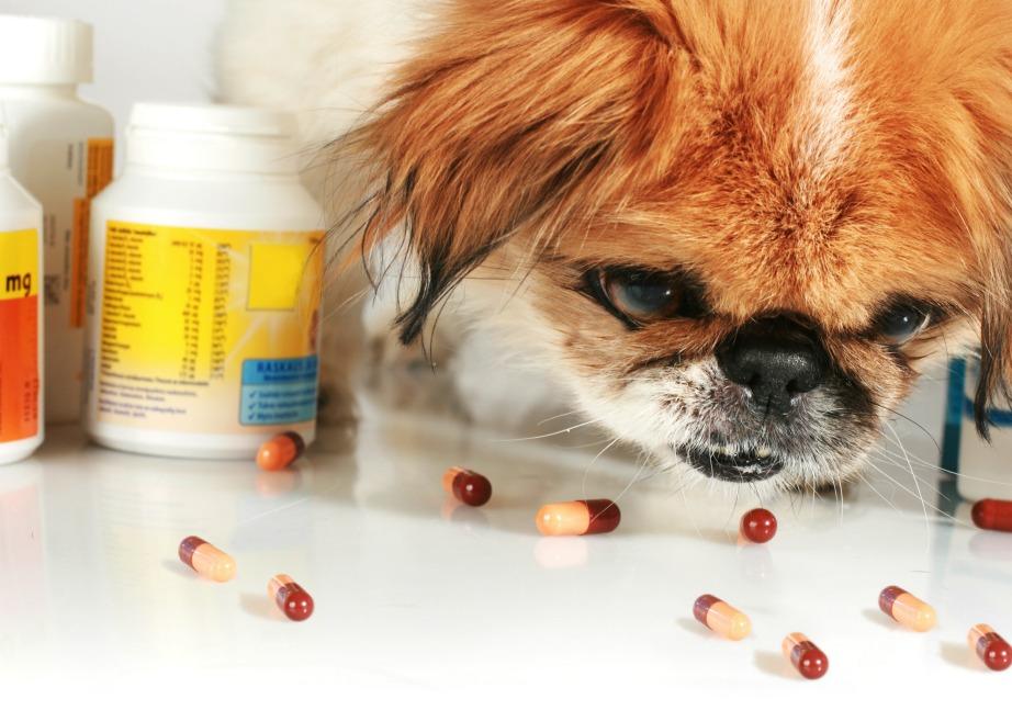 Μην αφήνετε στο οπτικό πεδίο του σκύλου σας οτιδήποτε θα μπορούσε να τον βλάψει.