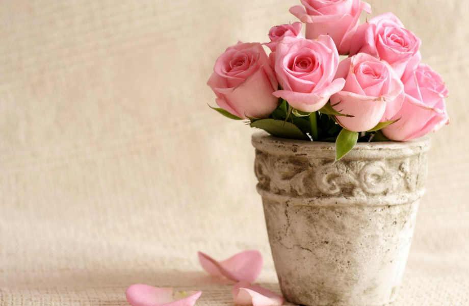 """Στα τριαντάφυλλα λέμε πάντα """"ναι""""-ακόμα κι όταν έξω κάνει ζέστη."""