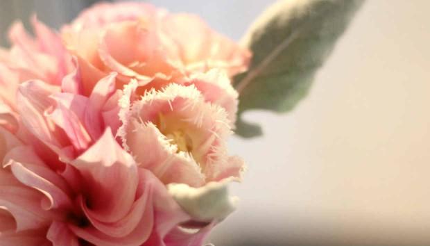 5 Λουλούδια που Αντέχουν στον Ήλιο του Καλοκαιριού!