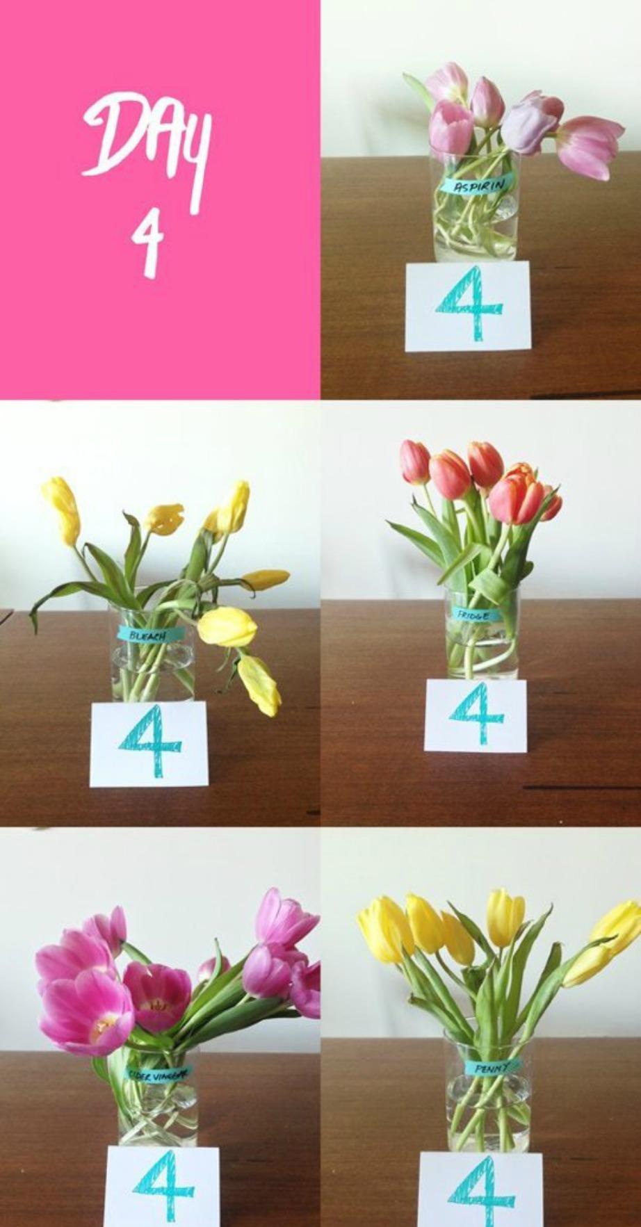 Την τέταρτη μέρα τα περισσότερα λουλούδια είχαν ήδη αρχίσει να μαραίνονται.
