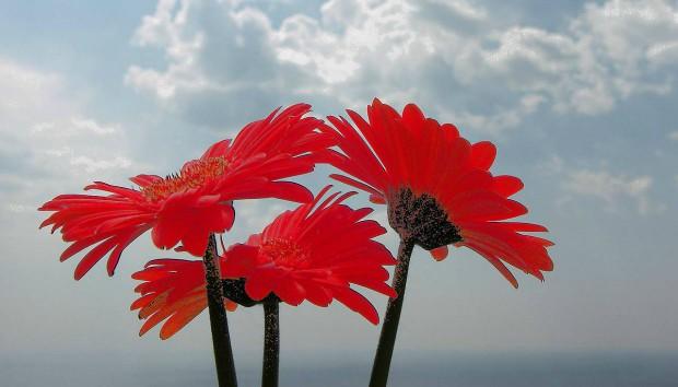 Αυτά Είναι τα Ωραιότερα Λουλούδια του Σεπτεμβρίου