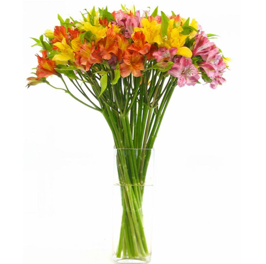 Οι αλστρομέριες είναι το λουλούδι της φιλίας.