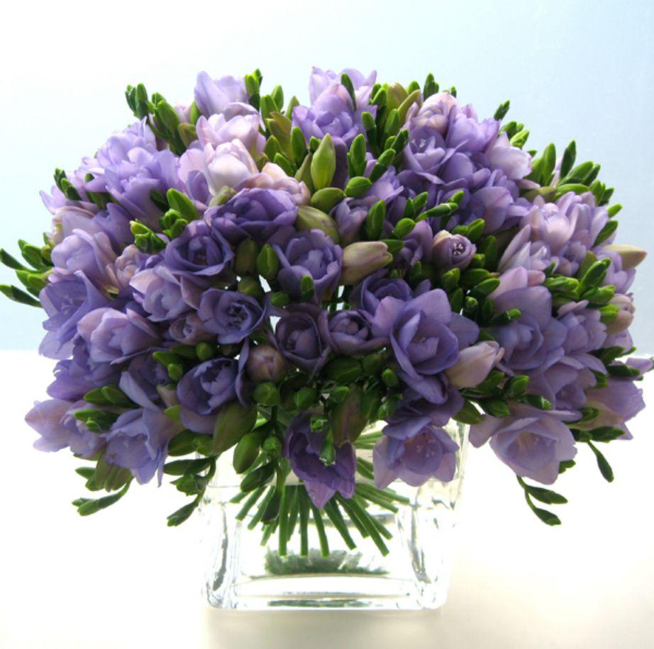 Η φρέζια είναι ένα λουλούδι που το συναντάμε συχνά σε γάμους και ανθοστολισμούς.