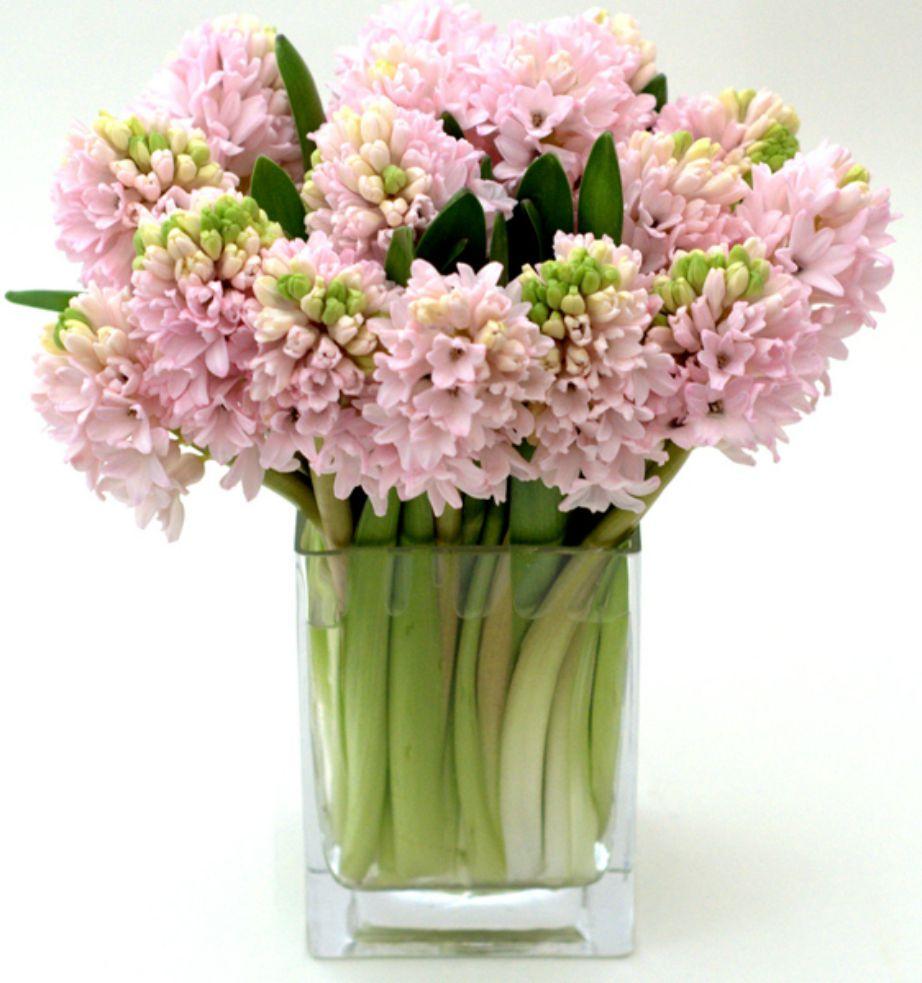Ο Υάκυνθος είναι ε΄να από τα ομορφότερα φθινοπωρινά λουλούδια.
