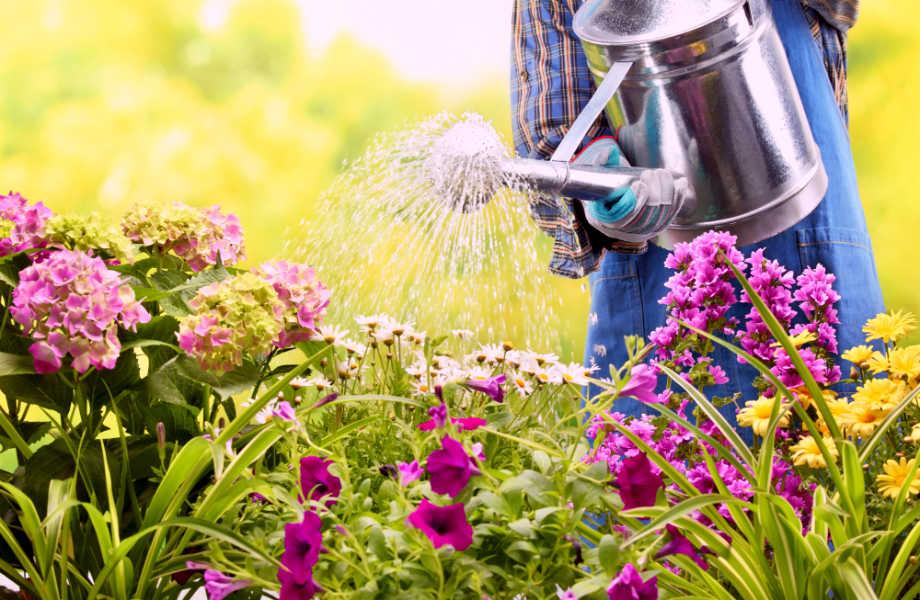 Για να κάνετε καθαρές δουλειές, προσέξτε την ορμή του νερού όταν ποτίζετε.
