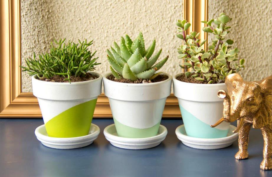 Τα φυτά δίνουν ζωντάνια και χρώμα σε κάθε σπίτι.