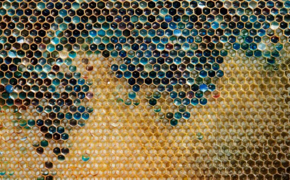 To 2012 κάποιες μέλισσες στη Γαλλία παρήγαγαν μπλε μέλι επειδή είχαν έρθει σε επαφή με ένα container που περιείχε M&M's.