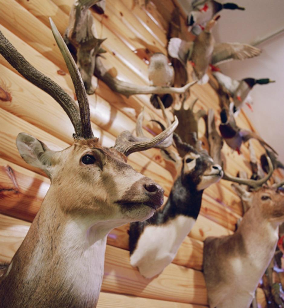Εκτός από τρομακτικό, το θέαμα των ταριχευμένων ζώων είναι και αποκρουστικό