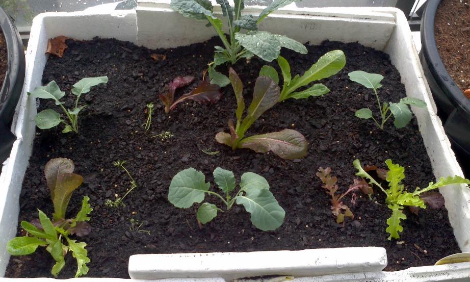 Αν δεν έχετε σκοπό να κάθεστε στο μπαλκόνι τότε απλά καλλιεργήστε τον χώρο προσθέτοντας μεγάλες γλάστρες με λαχανικά και βότανα.