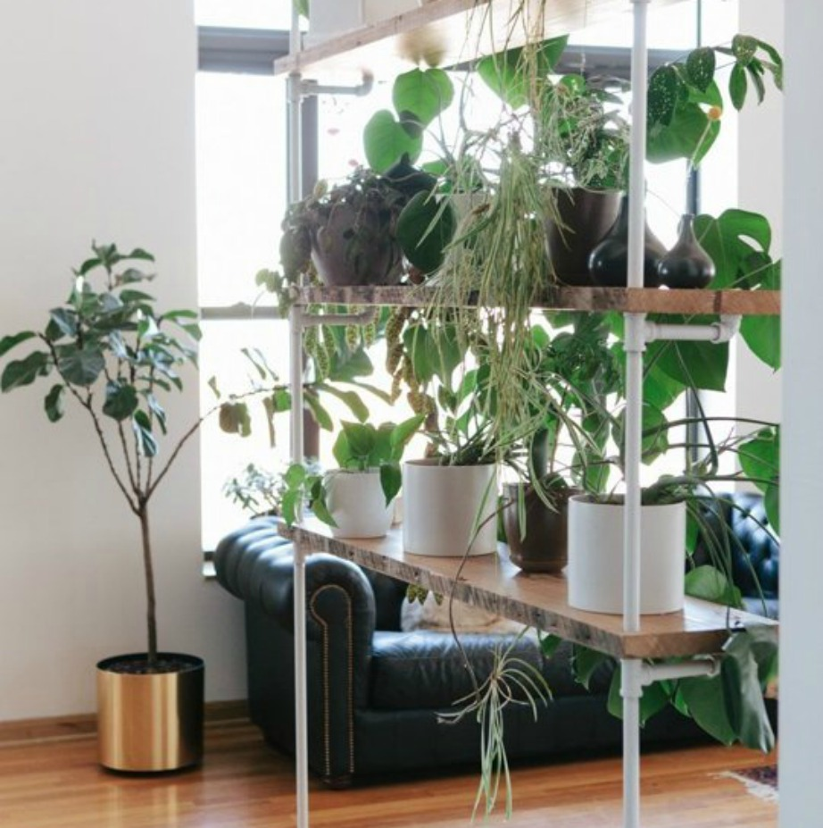 Φτιάξτε γωνιά με φυτά μέσα στο σπίτι.