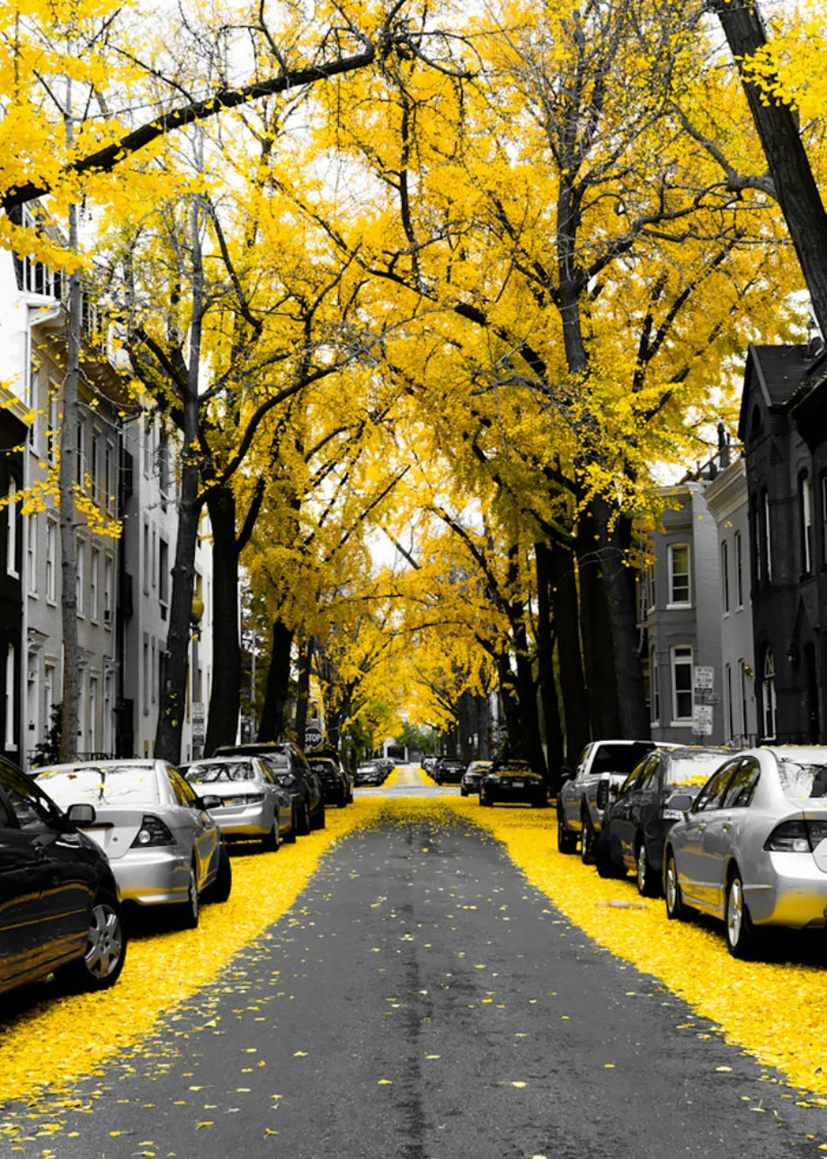 Ουάσινγκτον, Αμερική